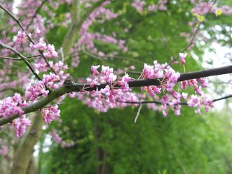 Residenzschloss Mergentheim, Arboretum im Schlossgarten